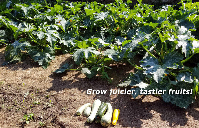 Grow juicier, tastier fruits, Hydros Environmental Diagnostics, Bourne, MA